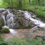 Potok šumi